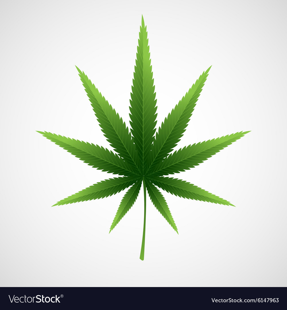 Cannabis marijuana hemp leaf vector