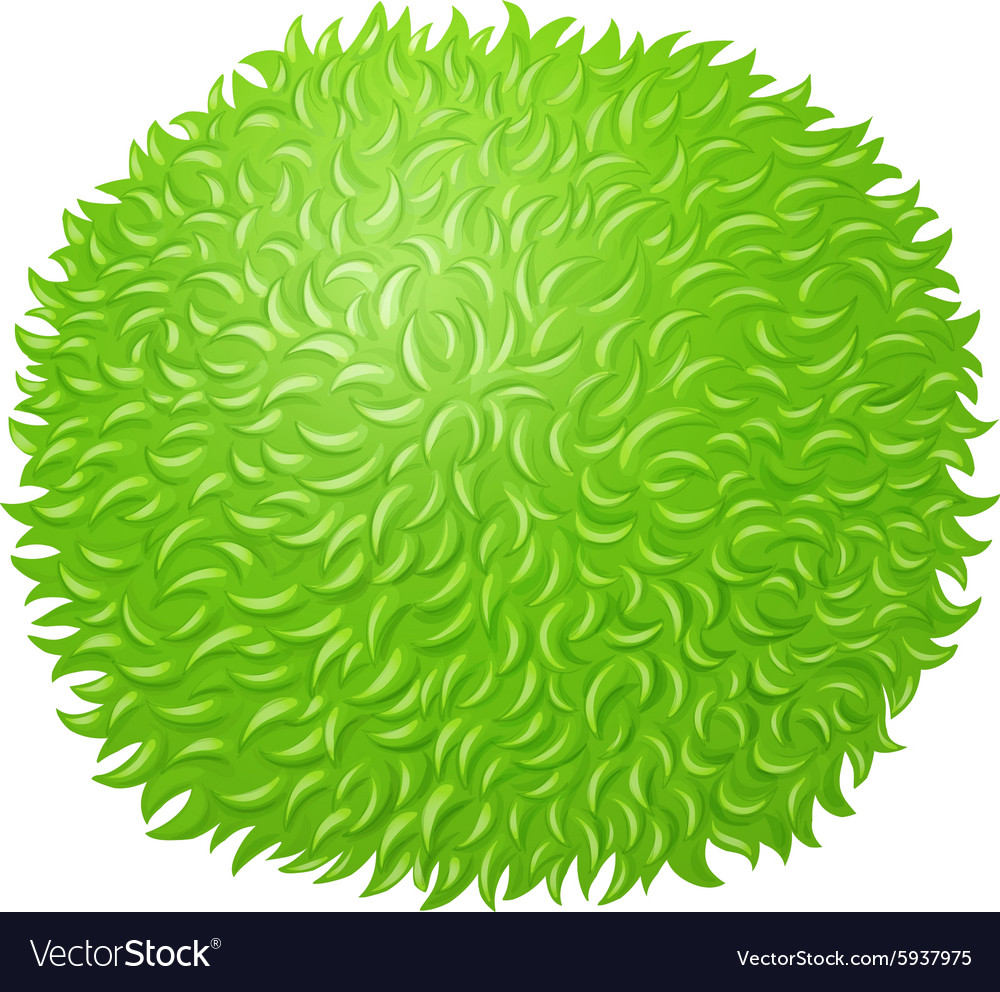 Green fluffy ball on white vector