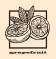 hand drawn grapefruits vector image