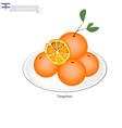 Israel Tangerines or Mandarin Orange vector image