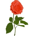 a red rose vector image vector image