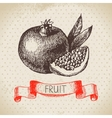 Hand drawn sketch fruit pomegranate Eco food vector image