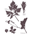 Set Herbarium of grass leaf vector image