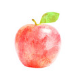 watercolor red apple fruit with leaf on white vector image