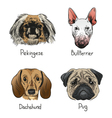 Drawing dog icons vector image vector image