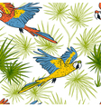 macaw parrots and palm leaves vector image