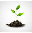 Plant sapling growing vector image