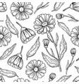 calendula seamless pattern isolated medica vector image