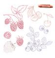 a set of berries raspberries blueberries vector image
