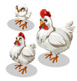 maturation stages of the chicken cartoon style vector image