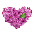 heart from flowers vector image vector image