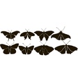Set Butterflys Silhouette vector image