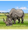 cartoon big rhino grazing in the meadow vector image