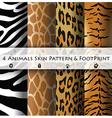 Animals Skin Pattern and Footprint vector image