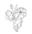 Hand drawn with tulips vector image