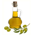 bottle of olive oil vector image vector image