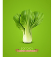 Pok Choy isolated on green background vector image
