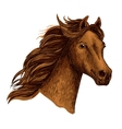 Arabian beautiful brown horse head vector image vector image