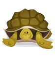 cute turtle character vector image