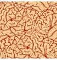 seamless brain convolutions vector image vector image