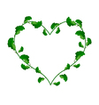 Evergreen Leaves in A Heart Shape Wreath vector image