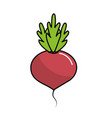 delicious and health onion vegetable vector image