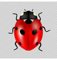 ladybug isolated in trasparent background vector image