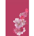 Cherry sakura postcard vector image