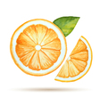 Watercolor orange isolated on white background vector image