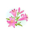 beautiful gift card with pink watercolor lilies vector image