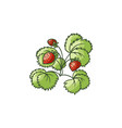 strawberry plant with green leaves ripe berries vector image