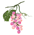 Bunch of pink grapes stylized polygonal vector image vector image