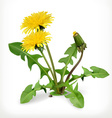 Dandelion flowers icon vector image