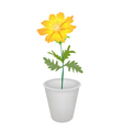 A Cosmos Flowers in A Flower Pot vector image
