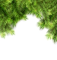 Natural Framework with Fir Twigs vector image