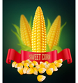 background with grains and cobs of corn and red ri vector image