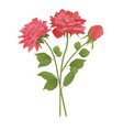 rose red 2 vector image