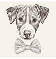 Sketch Jack Russell Terrier Dog with bow tie Hand vector image