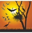 Group herons at sunset vector image vector image
