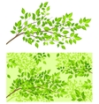 branch tree with green leaf vector image