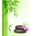 Background with green bamboo and spa stones vector image