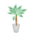A Lovely Palm Tree in Flower Pot vector image