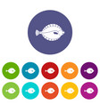 flounder icons set flat vector image