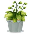 A green plant in a gray pot vector image vector image
