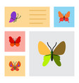 flat butterfly set of monarch summer insect vector image