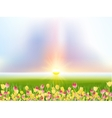 Spring flowers tulips in the sunlight EPS 10 vector image vector image