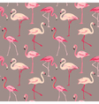 Flamingo Bird Background vector image