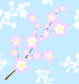 Texture of sakura cherry blossoms vector image
