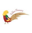 Cartoon golden or Chinese pheasant isolated on vector image