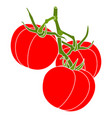3 three tomatoes branch poster isolated on white vector image